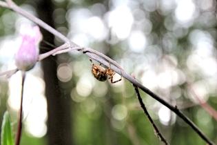 Hämä-hämä-häkki