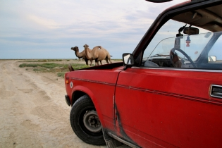 Lada ja kamelit