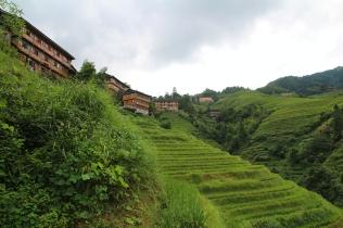 Riisipeltoa riittää