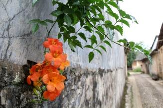 Seinäkoriste