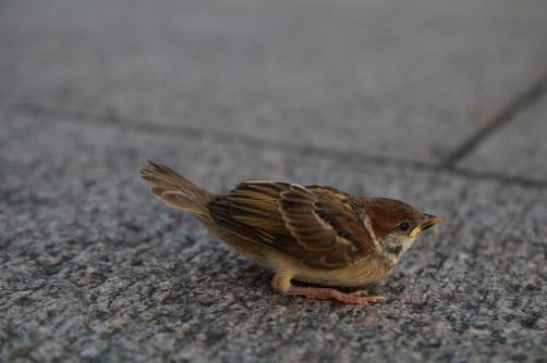 Lintunen aukiolla