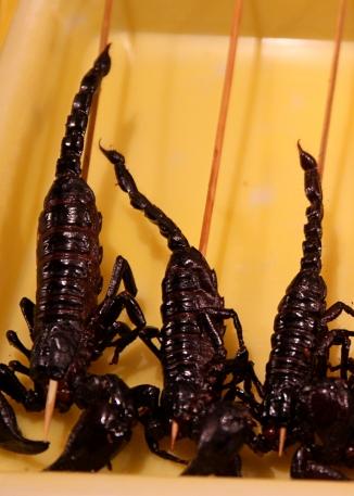 Mitenkäs skorpioni?