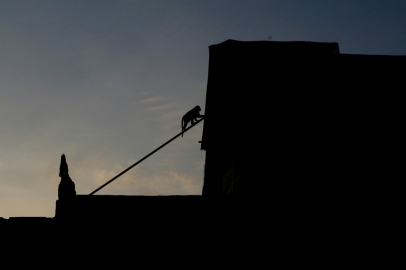Apina katolla