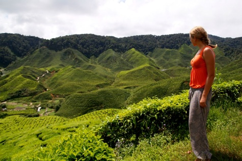 Cameron highlands, Malesia