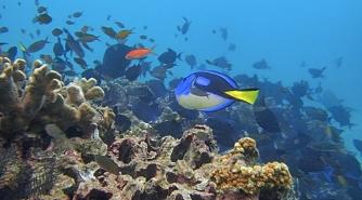 Kaloja ja koralleja alle 20 metriä kämpältä