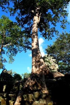 Hienoja puita
