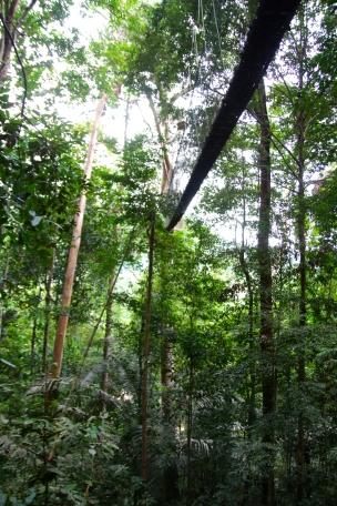 Viidakkoa