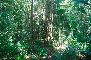 Viidakossa asioilla