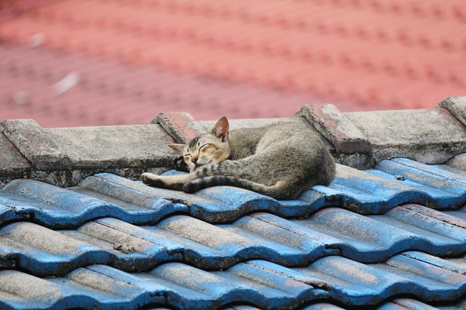 Kissa kuumalla katolla