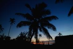 Palmun varjossa