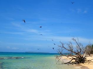Ensimmäinen saari, lintujen valtakunta
