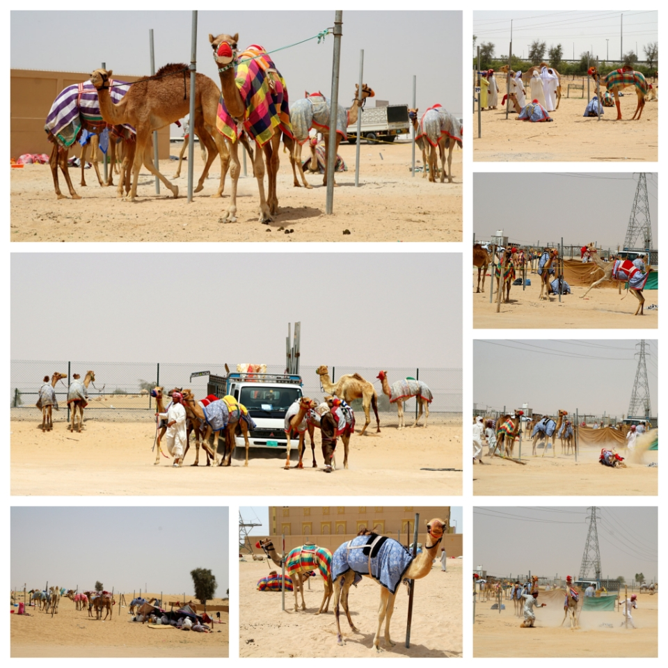 Villiä menoa kamelimarkkinoilla