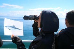 Valaita tai delfiineitä näköpiirissä?