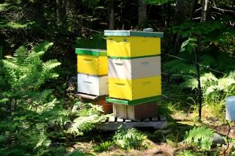 Mehiläisten majat