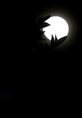 Kuu kulmassa