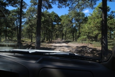 Metsätiellä
