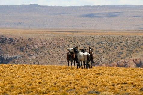 Hevoset kanjonin kupeelta