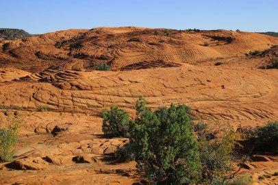 Punaista kalliota, Snow Canyon state park