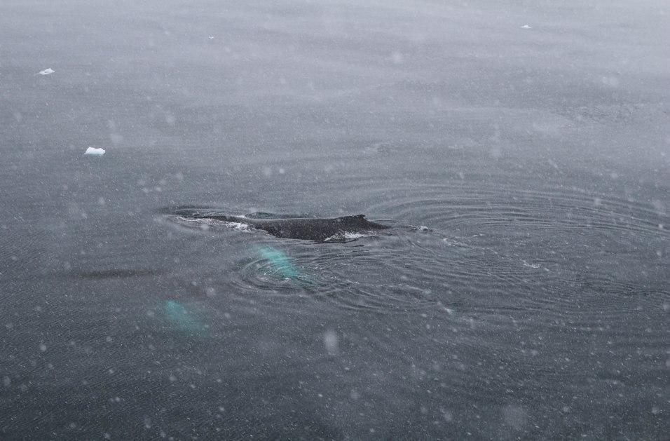 Valaita matkalla etelään