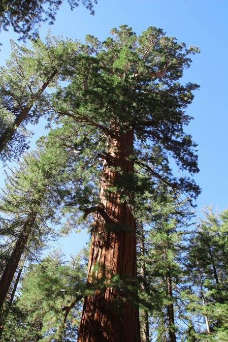 Mahtava puu