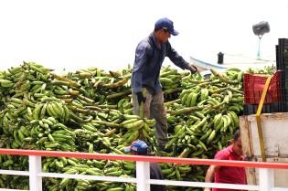 Banaaneilla