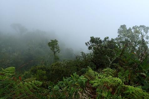 Sumua ja viidakkoa