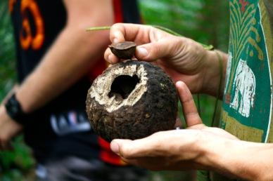 Parapähkinöiden kuori