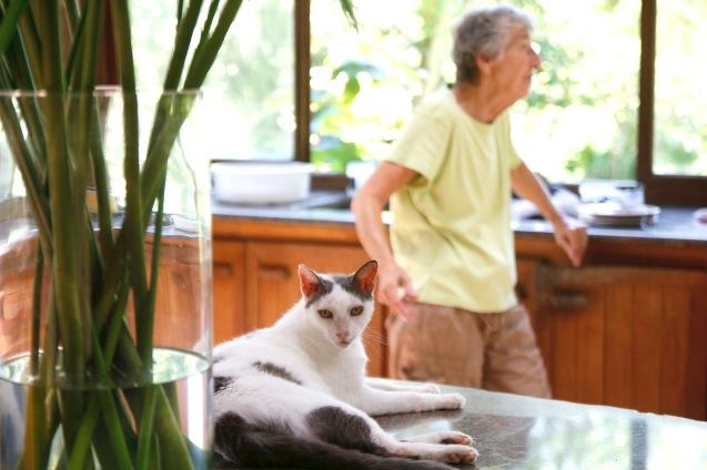Kissa ja sen omistaja