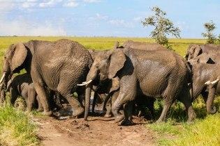 80 elefanttia marssi näin
