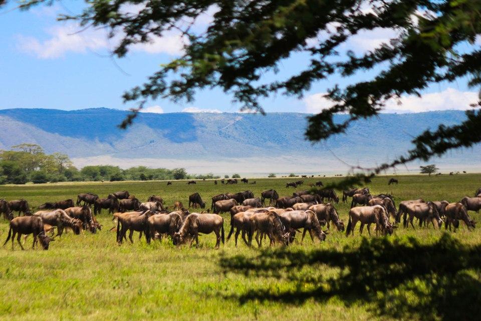 Ngorongoron lauma