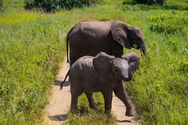 Pikku elefantti