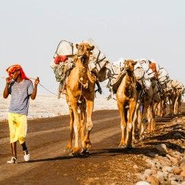 Mies ja kamelit