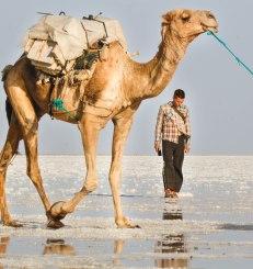 Lauri ja kameli