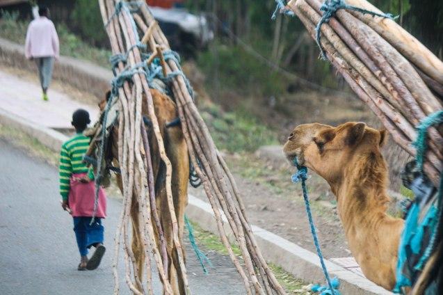 Etiopialaisia kantamuksia