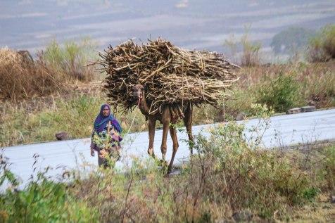 Rouva ja kameli
